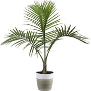 Top 10 Best Dog-Safe Indoor Plants in 2021 (Costa Farms, Hirt's Gardens, and More)