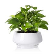 Top 10 Best Pots for Indoor Plants in 2021 (La Jolie Muse, Southern Patio, and More)