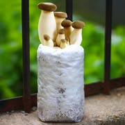 Top 10 Best Mushroom Grow Kits in 2021