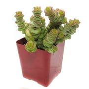 Top 10 Best Succulents in 2021 (Costa Farms, Plants for Pets, and More)