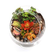 Top 10 Best Terrarium Kits in 2021 (Hirt's Gardens and More)