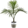Top 10 Best Plants for Your Bathroom in 2021 (Costa Farms and More)
