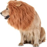 Top 10 Best Dog Halloween Costumes in 2020 (Rubie's, Animal Planet, and More)