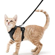 Top 10 Best Cat Harnesses in 2020 (Kitty Holster, rabbitgoo, and More)